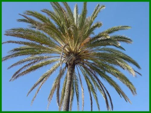 palm2.jpg