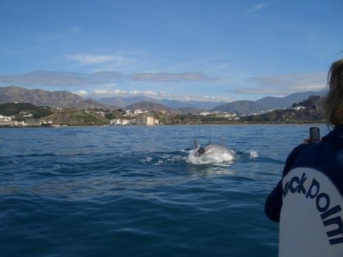 You might get this lucky. Dolphins are a common site here off the coast