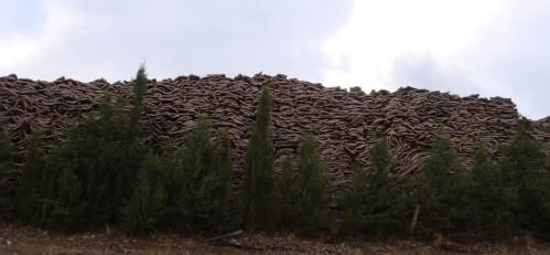 The big pile